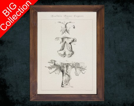 Human Anatomy, medical student gift,, doctor office decor, VAGINA CERVIX FALLOPIAN anatomical poster