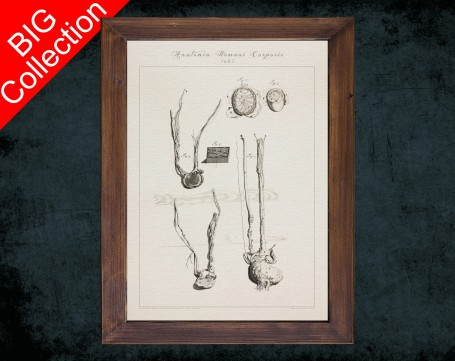 Human Anatomy, medical student gift,, doctor office decor, TESTICLE SPERMATIC ARTERY anatomical poster
