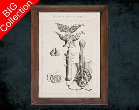 Human Anatomy, medical student gift,, doctor office decor, PENIS PROSTATE SPHINCTER anatomical poster