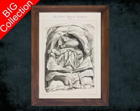 Human Anatomy, medical student gift,, doctor office decor, KIDNEY SPLEEN LIVER anatomical poster