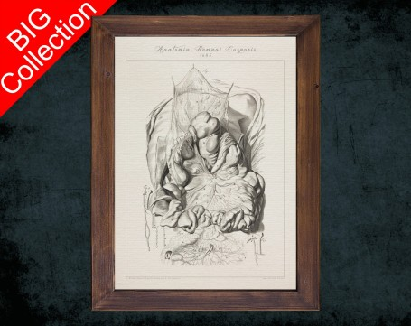 Human Anatomy, medical student gift,, doctor office decor, HUMAN DIGESTIVE SYSTEM anatomical poster