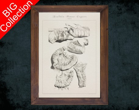 Human Anatomy, medical student gift,, doctor office decor, DUODENUM INTESTINE JEJUNUM anatomical poster