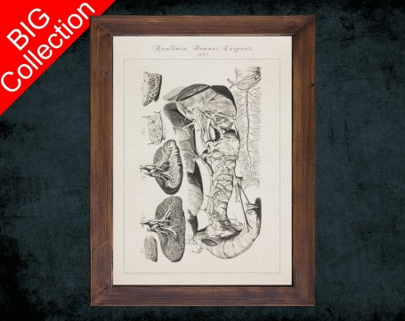 Human Anatomy, medical student gift,, doctor office decor, KIDNEY RENAL COLON anatomical poster