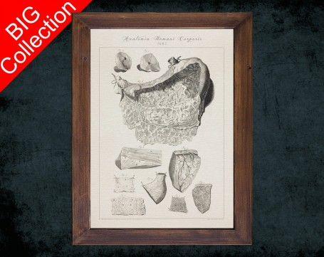 Human Anatomy, medical student gift,, doctor office decor, STOMACH CARDIA GASTRIC canal anatomical poster