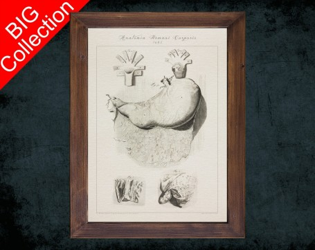 Human Anatomy, medical student gift,, doctor office decor, STOMACH gastroenterologists anatomical poster