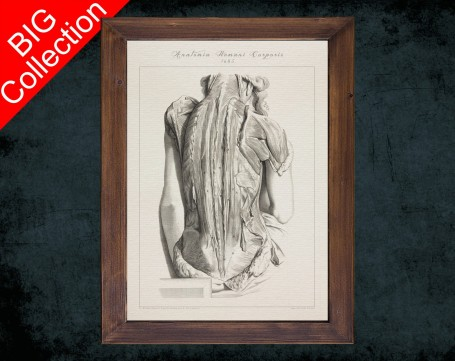 Human Anatomy, medical student gift,, doctor office decor, WOMEN BACK MUSCLE anatomical poster