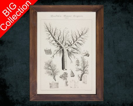 Human Anatomy, medical student gift,, doctor office decor, LUNG TRACHEA BRONCHI anatomical poster