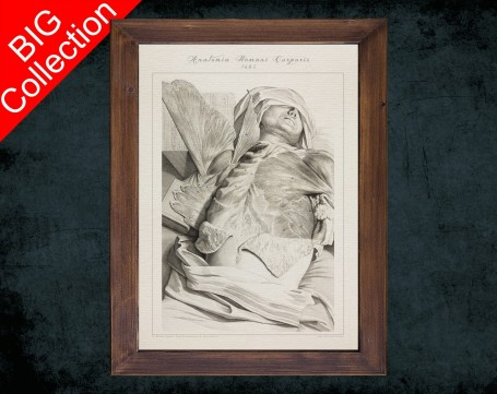 Human Anatomy, medical student gift,, doctor office decor, PECTORALIS ABDOMINAL MUSCLE anatomical poster