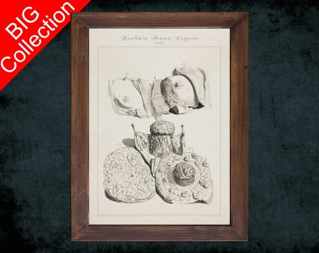 Human Anatomy, medical student gift,, doctor office decor, BREAST MAMMARY GLAND anatomical poster