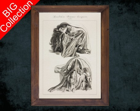 Human Anatomy, medical student gift,, doctor office decor, CHIN NECK THROAT anatomical poster