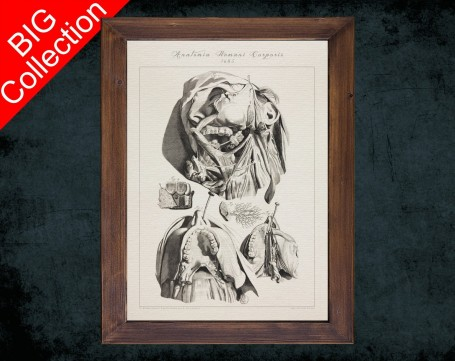 Human Anatomy, medical student gift,, doctor office decor, JAW TEETHING MANDIBLE anatomical poster
