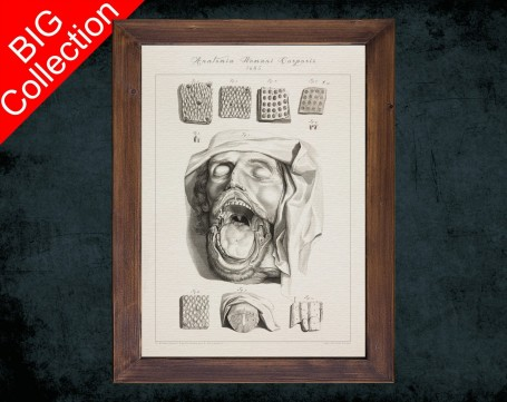 Human Anatomy, medical student gift,, doctor office decor, MOUTH TONGUE PAPILLA anatomical poster