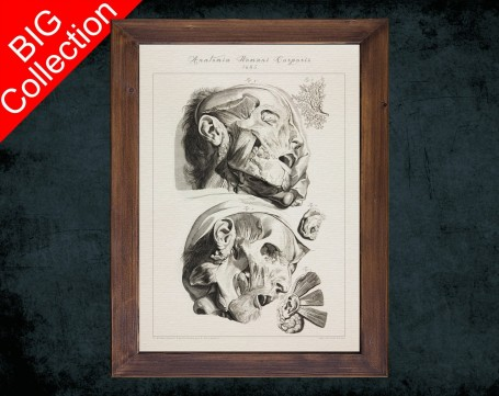 Human Anatomy, medical student gift,, doctor office decor, HEAD MUSCLE FACE anatomical poster