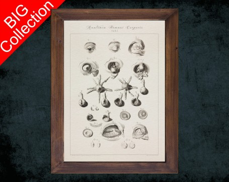 Human Anatomy, medical student gift,, doctor office decor, EYE BALL IRIS anatomical poster