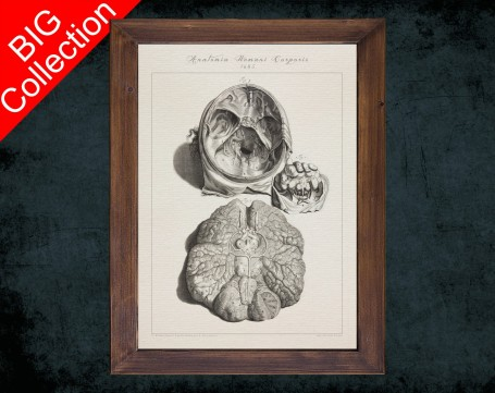 Human Anatomy, medical student gift,, doctor office decor, CEREBELLUM CERVICAL SPINE anatomical poster