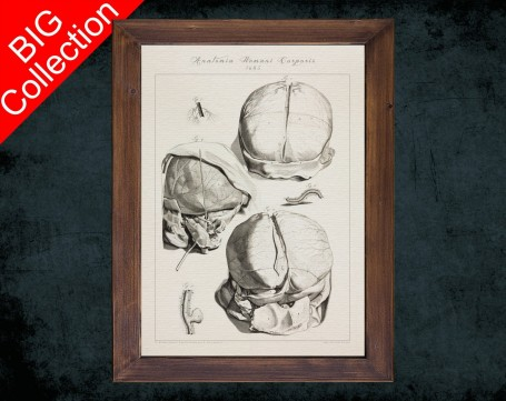 Human Anatomy, medical student gift,, doctor office decor, HEAD BRAIN SKULL anatomical poster