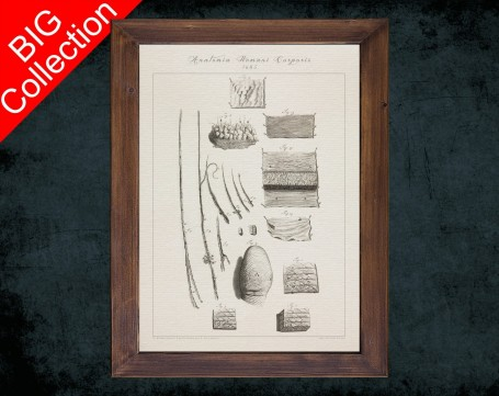 Human Anatomy, medical student gift,, doctor office decor, FINGERPRINT EPIDERMIS FUR anatomical poster