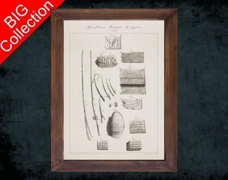 Human Anatomy, medical student gift,, doctor office decor, FINGERPRINT EPIDERMIS FUR anatomical poster