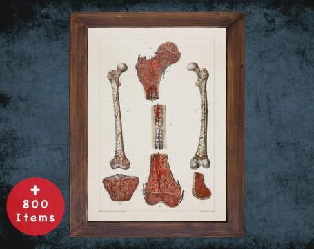 Anatomy art, BONE BLOOD IRRIGATION, medical student gift, Orthopedist and Orthopedic, doctor office decor