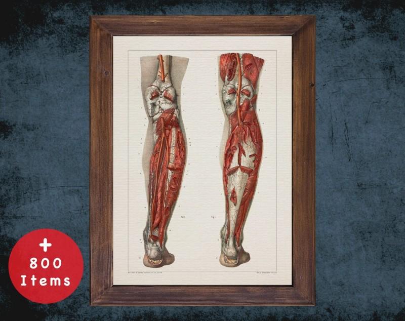 Anatomy art, LEG KNEE VEIN, medical student gift, Orthopedist and Orthopedic, doctor office decor