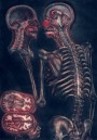 Medical art, vintage anatomy, curiosities oddities,  SKELETON BRAIN CUT, medical student gift, doctor decoration