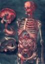 Medical art, vintage anatomy, curiosities oddities,  SKELETON GUTS SKULL, medical student gift, doctor decoration