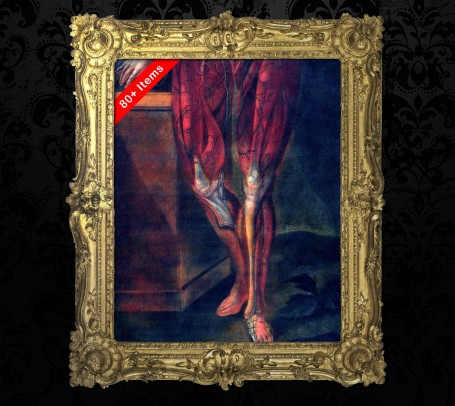 Medical art, vintage anatomy, curiosities oddities,  LEG KNEE FOOT, medical student gift, doctor decoration