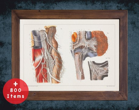 Anatomy art, VAGUS MICROSCOPY NERVE, medical student gift, Neurologist and Neurology, doctor office decor