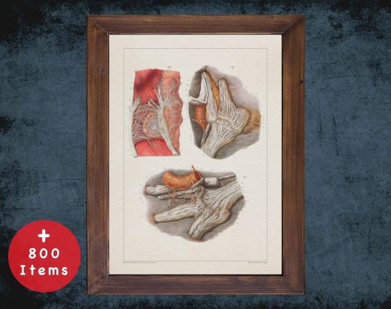 Anatomy art, TRIGEMINAL NERVE MICROSCOPY, medical student gift, Neurologist and Neurology, doctor office decor