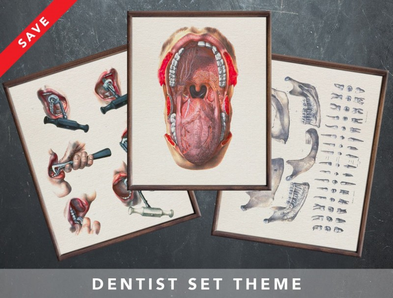 Anatomy Art Set Dentist Dental Medical Student Gift For Doctor
