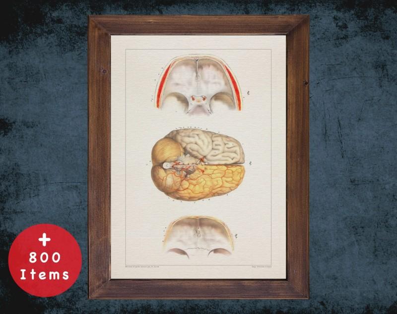 Anatomy art, BRAIN CRANIAL NERVES, medical student gift, Neurologist and Neurology, doctor office decor