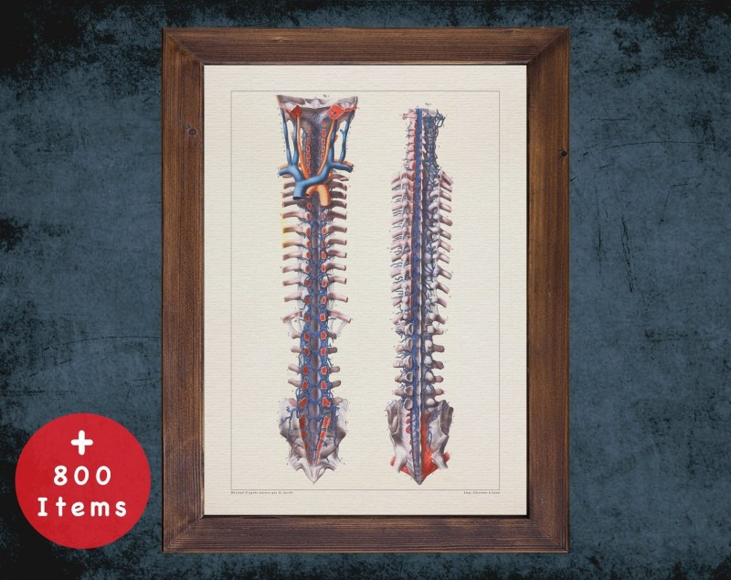 Anatomy art, VERTEBRAL COLUMN ARTERY, medical student gift, Neurologist and Neurology, doctor office decor