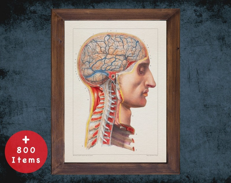 Anatomy art, CERVICAL BLOOD IRRIGATION, medical student gift, Neurologist and Neurology, doctor office decor