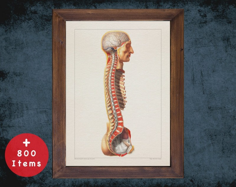 Anatomy art, VERTEBRAE SPINAL CORD, medical student gift, Neurologist and Neurology, doctor office decor