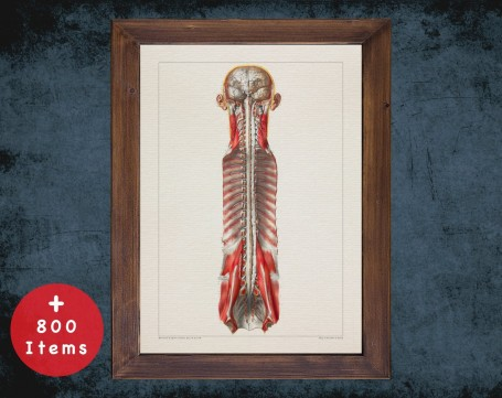 Anatomy art, CENTRAL NERVOUS SYSTEM, medical student gift, Neurologist and Neurology, doctor office decor