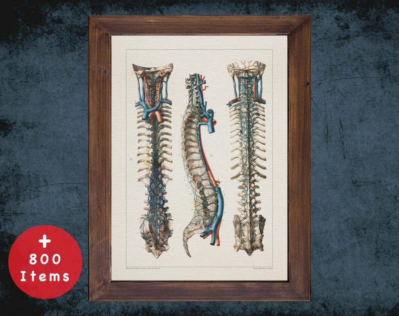 Anatomy art, SPINAL VENOUS SYSTEM, medical student gift, Neurologist and Neurology, doctor office decor