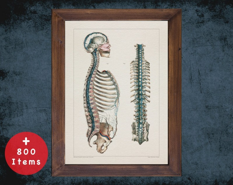 Anatomy art, DURAL VENOUS SPINE, medical student gift, Neurologist and Neurology, doctor office decor