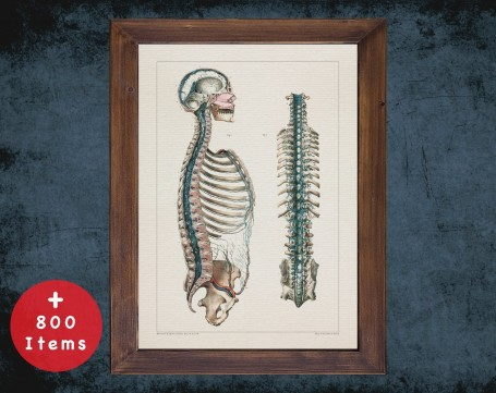 Anatomy art, DURAL VENOUS SPINE, medical student gift, Neurologist and Neurology, doctor office decor