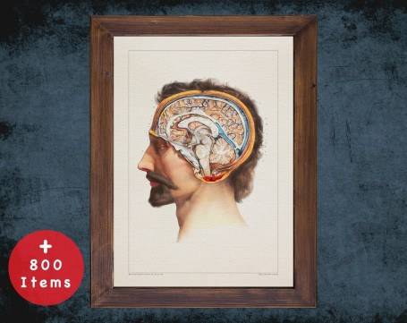 Anatomy art, HEAD BRAIN CEREBELLUM, medical student gift, neuroscience and Neurosurgery, doctor office decor