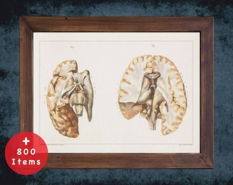 Anatomy art, BRAIN CENTRAL CANAL, medical student gift, neuroscience and Neurosurgery, doctor office decor
