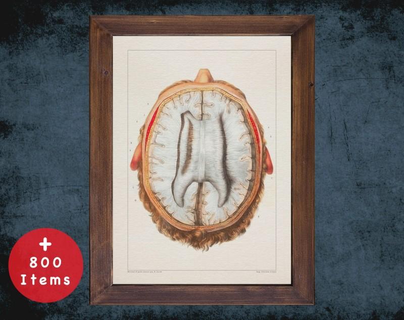 Anatomy art, BRAIN INSIDE VIEW, medical student gift, neuroscience and Neurosurgery, doctor office decor