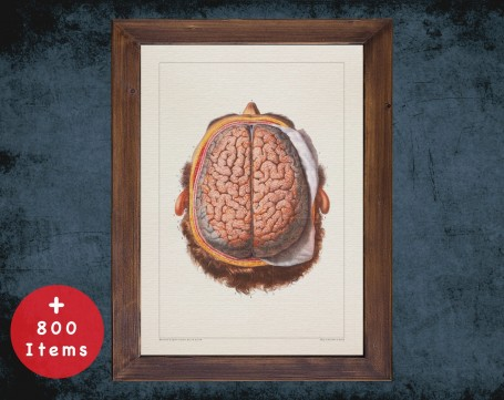 Anatomy art, BRAIN TWO LOBES, medical student gift, neuroscience and Neurosurgery, doctor office decor