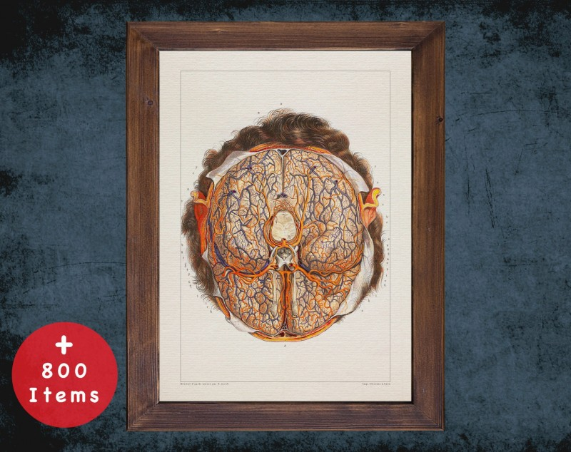 Anatomy art, BRAIN BLOOD SYSTEM, medical student gift, neuroscience and Neurosurgery, doctor office decor