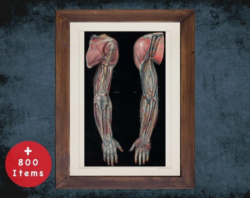 Anatomy art, FOREARM SHOULDER VEIN, medical student gift, Vessel blood and Vascular surgery, doctor office decor