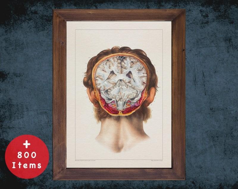 Anatomy art, HEAD BRAIN CEREBELLUM, medical student gift, neuroscience and Neurosurgery, doctor office decor