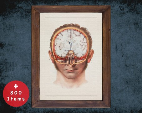 Anatomy art, BRAIN FACE CUT, medical student gift, neuroscience and Neurosurgery, doctor office decor