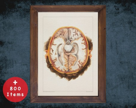 Anatomy art, BRAIN CROSS SECTION, medical student gift, neuroscience and Neurosurgery, doctor office decor