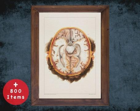 Anatomy art, BRAIN CROSS SECTION, medical student gift, neuroscience and Neurosurgery, doctor office decor