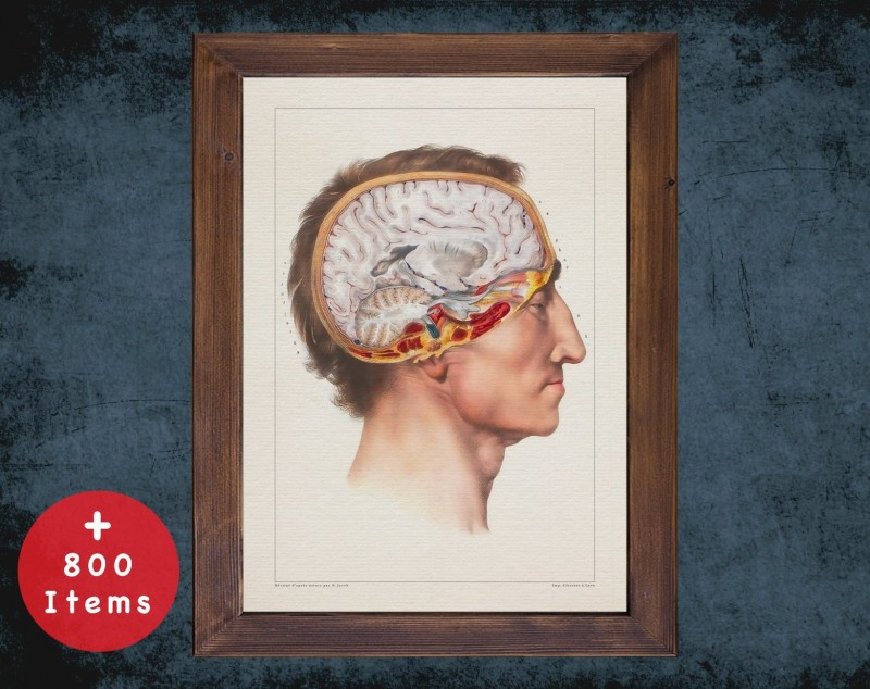 Anatomy art, BRAIN LATERAL VIEW, medical student gift, neuroscience and Neurosurgery, doctor office decor