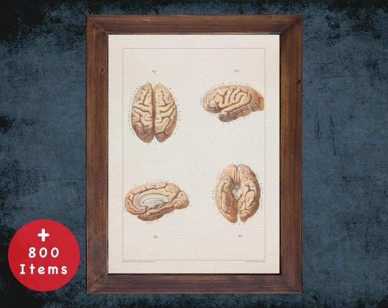 Anatomy art, BRAIN FOUR SIDE, medical student gift, neuroscience and Neurosurgery, doctor office decor